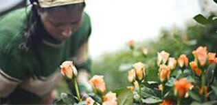 Procona per i coltivatori